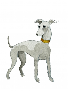 The Richmond Greyhound